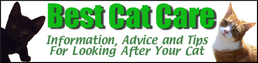 Best Cat Care