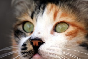 cat_face_5-other