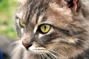10 Things to Learn About Caring For Cats